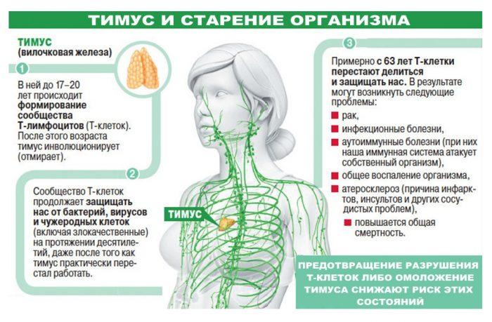 starenie-organizma-timus-4-pole