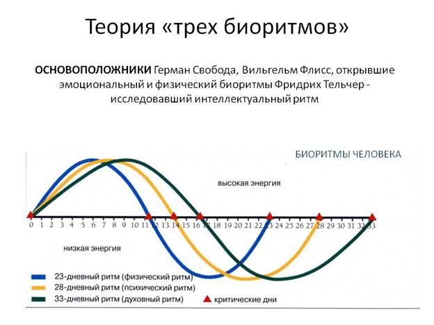 sovmestimost-po-bioritmam-teoriya-trekh-biotitmov