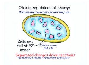 poluchenie-biologicheskoy-energii-4-pole