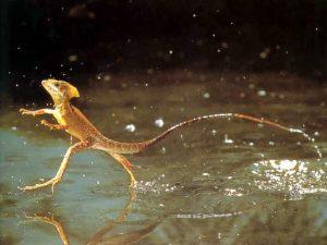 dzherald-pollak-chetvertaja-faza-vody-jashherica-hodit-po-vode
