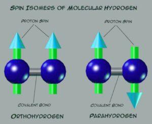 Паравода и ортовода спин протонов воды