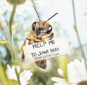 5g и пчелы