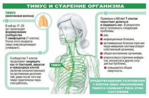 starenie-organizma-timus-4-pole-baner